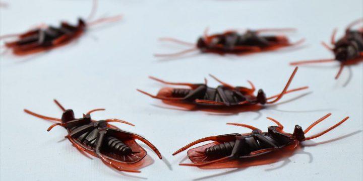 滅蟑螂公司提供專業滅殺防治方案